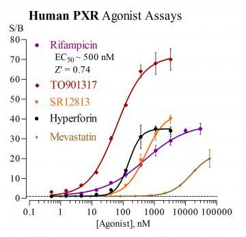 Human PXR Reporter Assay System, 1 x 384-well format assay