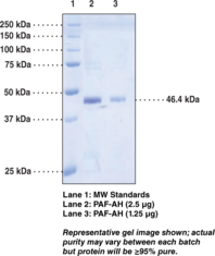 PAF Acetyl<wbr>hydrolase (human, recombinant)