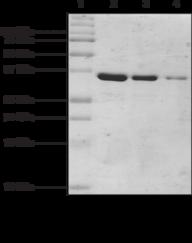 MeCP2 (human recombinant; methyl binding domain aa 77-<wbr/>166)