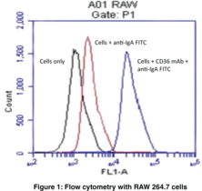CD36 Monoclonal Antibody (Clone JC63.1)