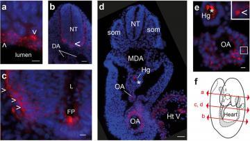 Prion Protein Monoclonal Antibody - Sha31