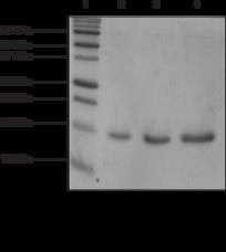 DPY-<wbr/>30 (human recombinant)