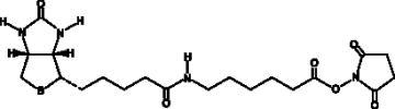 Biotin-<wbr/>X-<wbr/>NHS