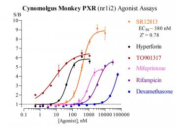 Cyn Monkey PXR Reporter Assay System, 3 x 32 assays in 96-well format