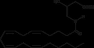 N-<wbr/>Arachidonoyl-<wbr/>3-<wbr/>hydroxy-<wbr/>γ-<wbr/>Aminobutyric Acid