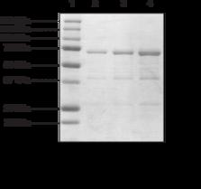 BRD2 bromodomains 1 and 2 (human recombinant)