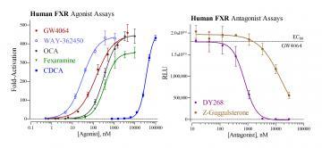 Human FXR Reporter Assay System, 3 x 32 assays in 96-well format
