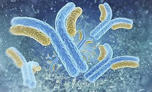 Polyclonal & Monoclonal Antibodies Bertin Bioreagent 2