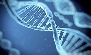 Cloning Gene Expression Bertin Bioreagent
