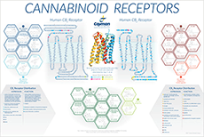 Cannabinoid receptors Wall Poster Bertin Bioreagent
