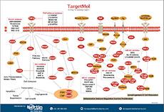 Immunology/Inflammation Poster TargetMol