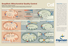 Mitochondrial Quality Control Snapshot Bertin Bioreagent