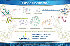 Histone Modification Cayman Chemical Bertin Bioreagent