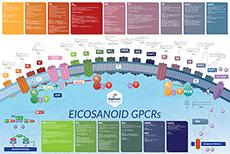 Eicosanoid GPCR Pathway Cayman Chemical Bertin Bioreagent