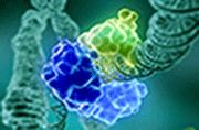 DNA Repair Bertin Bioreagent