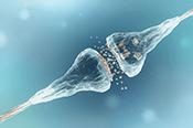 Neurotransmitters Did you know Bertin Bioreagent