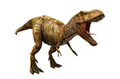 Dinosaure Pain and Inflammation Did you know?