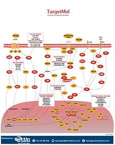 Endocrinology Poster TargetMol